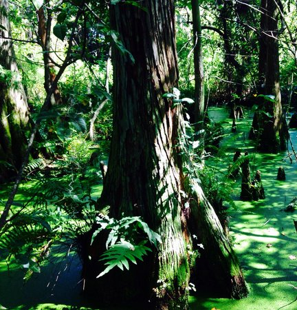 Jupiter, FL: Beautiful Hammock
