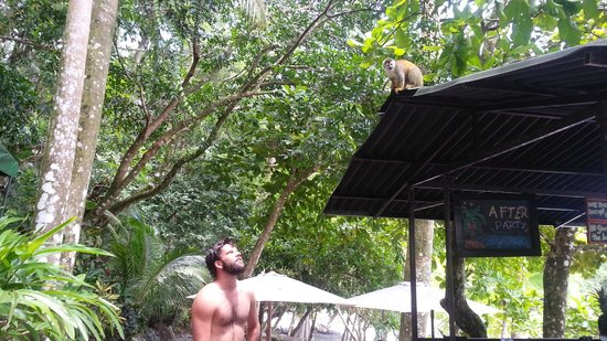 Tulemar Bungalows & Villas: More Monkeys at Tulemar Beach