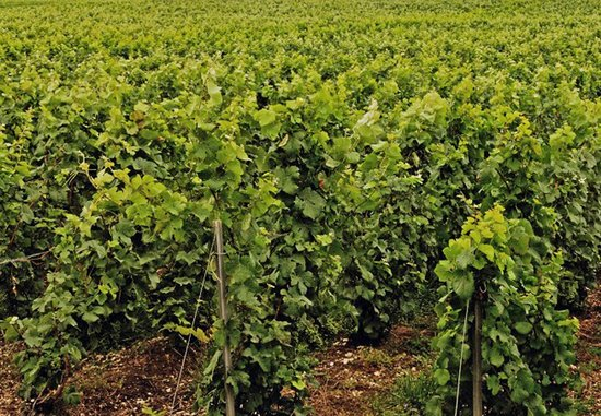 Champagne Boulard-Bauquaire