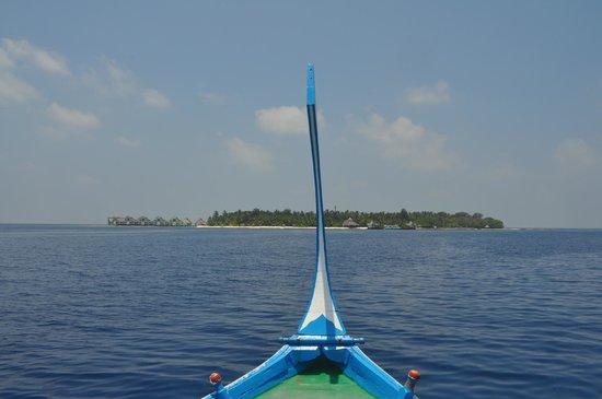 Ellaidhoo Maldives by Cinnamon: Island View