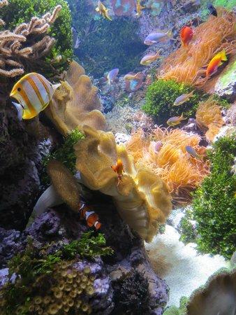 Shedd Aquarium: Coral Reefs!