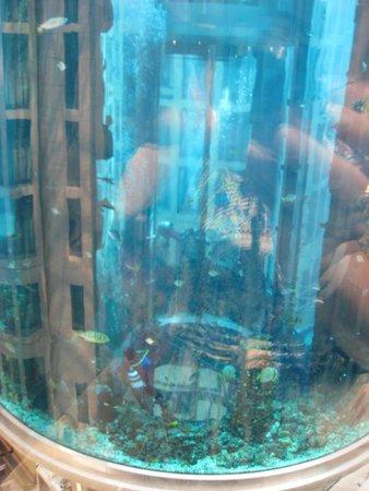 Radisson Blu Hotel, Berlin: fish tank