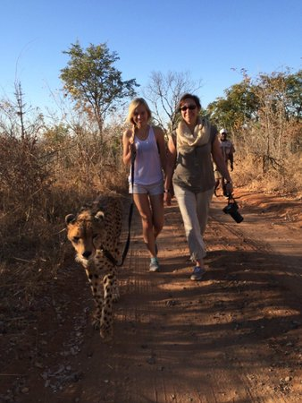 The Elephant Camp: Walking Sylvester
