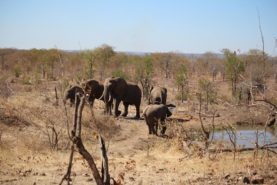 The Elephant Camp: The water hole