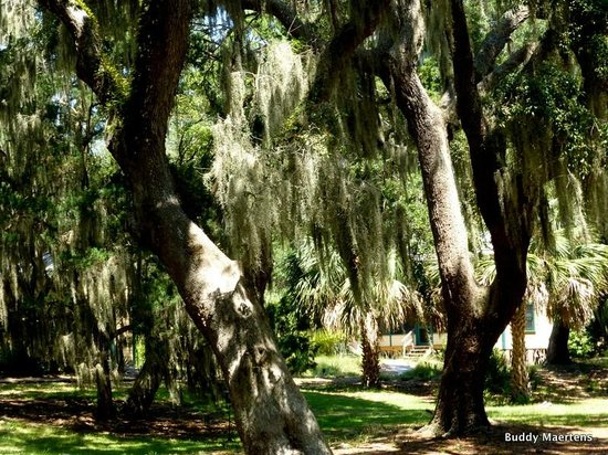 The Lodge on Little St. Simons Island : The beautiful setting at the Lodge