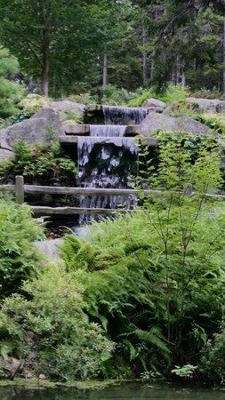 Coastal Maine Botanical Gardens: Rhododendron garden water fall