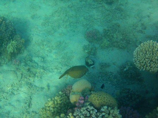 Lotus Bay: corals are very close