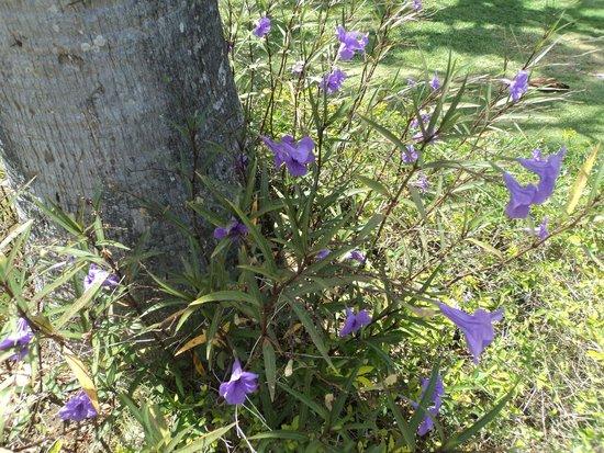 Royal Decameron Club Caribbean: Colourful flowers