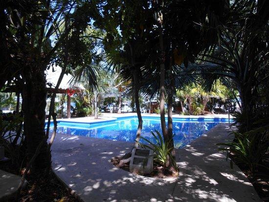 Sotavento Hotel & Yacht Club: zona de alberca