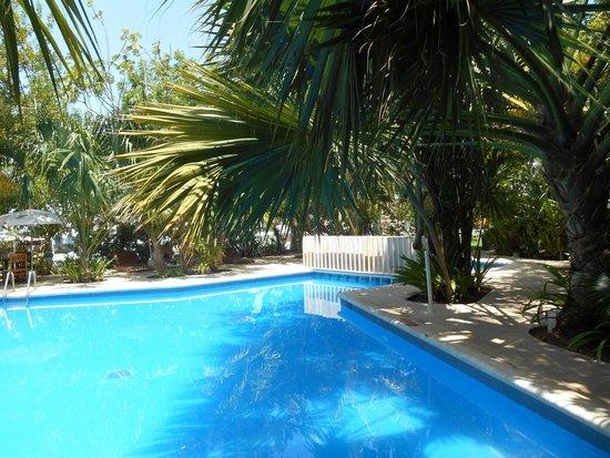 Sotavento Hotel & Yacht Club : zona de alberca