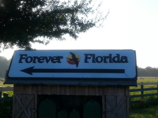 Forever Florida: Upon arrival