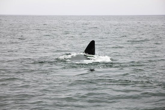 Hermanus Whale Cruises: Фотоохота