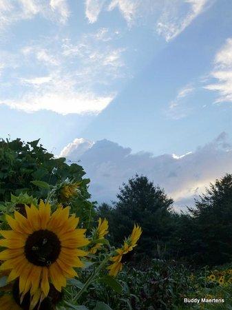 Sunset view from the Mast Farm Inn garden