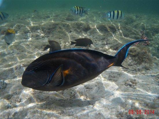 Concorde Moreen Beach Resort & Spa Marsa Alam : acquario naturale