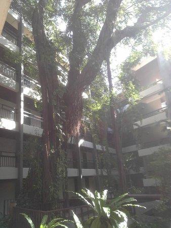 Siam Bayshore: Garden