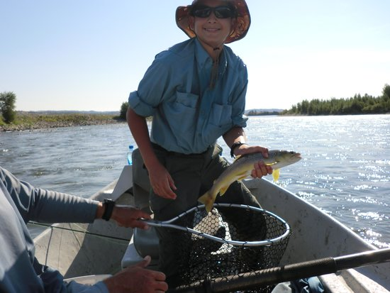 Montana anglers delivers madison river brown trout for Fly fishing vacation montana
