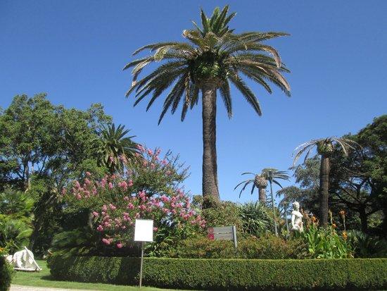 Pestana Palace Lisboa Hotel & National Monument: jardin botanique
