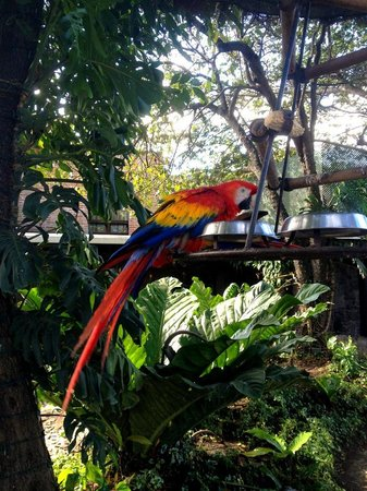 Hotel Museo Spa Casa Santo Domingo: Parrots on the Property