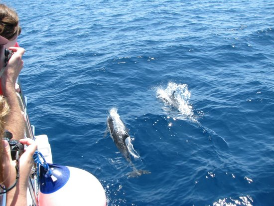 Dana Point, CA: The dolphins enjoying our company and playing with our boat.