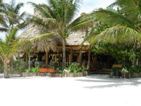 Ramon's Village Resort: Pineapples from the beach