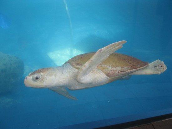 Texas State Aquarium: Turtle