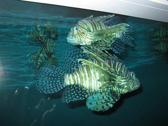 Texas State Aquarium: Scorpion fish??