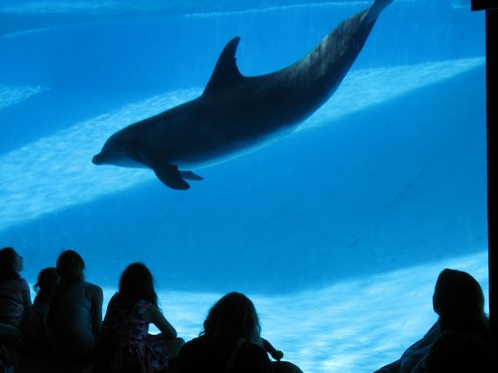 Texas State Aquarium: Dolphin - downstairs viewing area