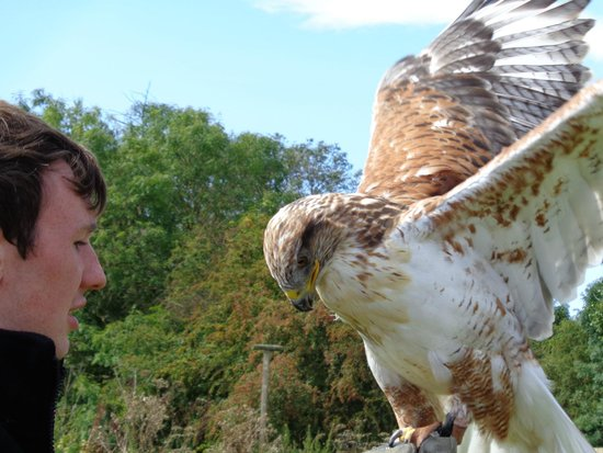 York Bird of Prey Centre: Nice to see you