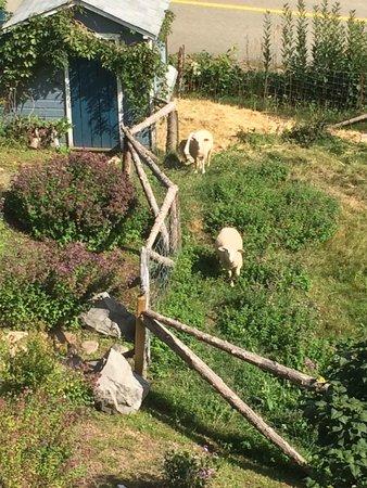 Auberge Cap-aux-corbeaux: Côté champêtre