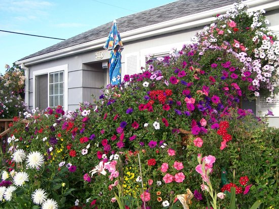 Paradise Suites & Rentals: The unit where we stayed - flowers galore!