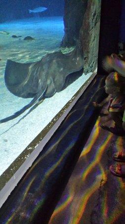 Lanzarote Aquarium : Sea life