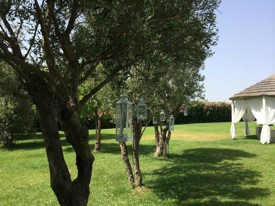 Hotel Borgo Pantano: Olive Tree