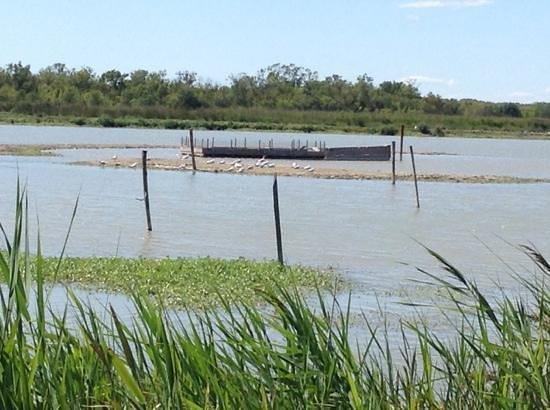 Les Marais du Vigueirat: marais