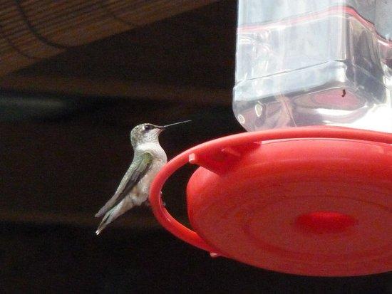 Old Clark Inn: de kolibri