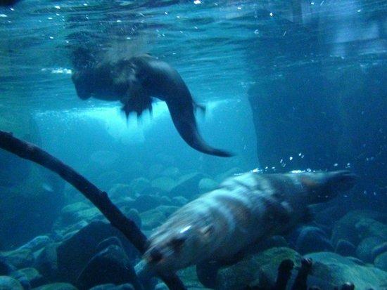 Seattle Aquarium : River Otters