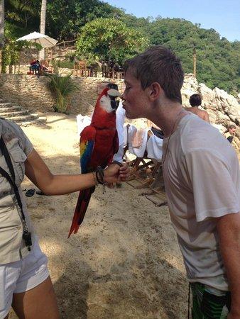 Vallarta Adventures - Las Caletas Beach Hideaway : The parrot's kiss