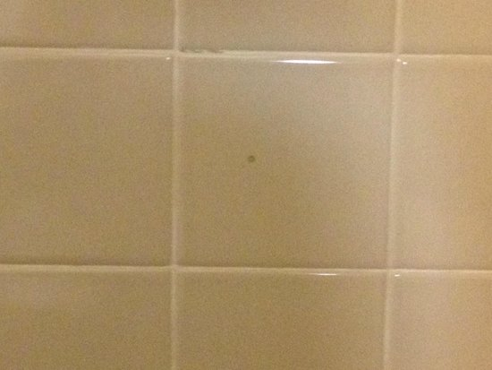 Crowne Plaza Jacksonville Airport Hotel: Shower Wall