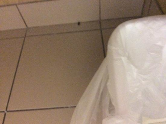 Best Western Windsor Inn & Suites: dead bug