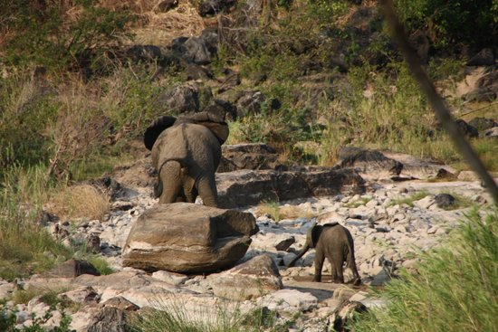 Bua River Lodge: And her calf