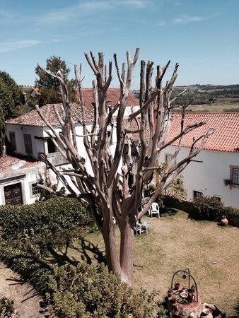 O Alcaide: Le jardin vu de la terrasse