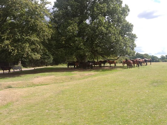 Peel House Bed & Breakfast: New Forest Ponies