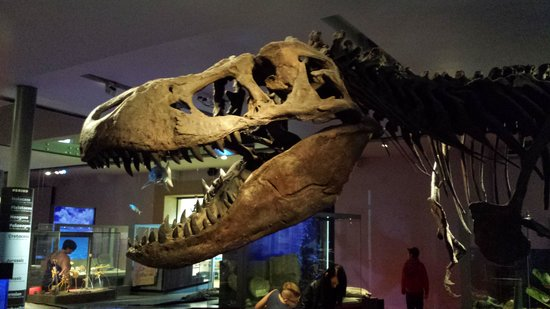 The Great North Museum: Dinosaurs