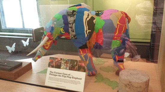 The Great North Museum: Flip Flop Elephant