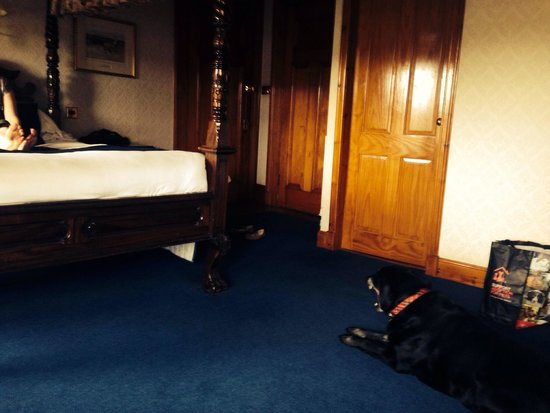 Somerton House Hotel : The dog like the room