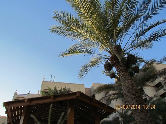 InterContinental Aqaba Resort: Outside view