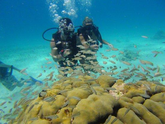 Cancun Scuba For You: buceo en cancun