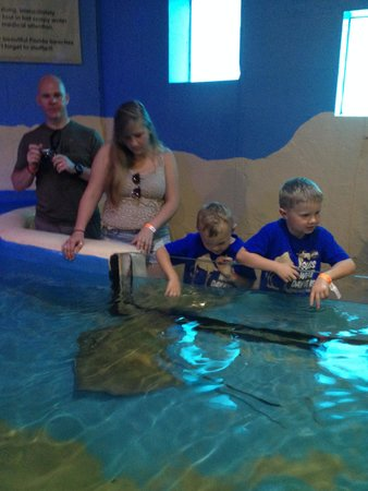Clearwater Marine Aquarium: Touching Rays