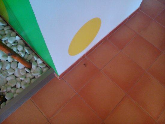 Suite Hotel Elba Castillo San Jorge & Antigua: cucarachas