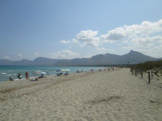 Port dAlcúdia - Picture of Playa de Alcudia, Port dAlcudia - TripAd...