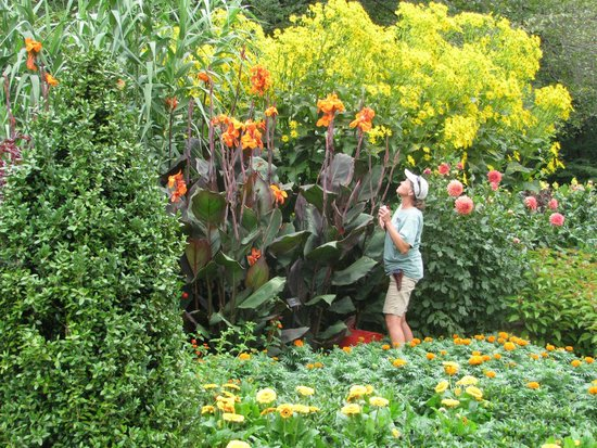 Longwood Gardens : Cannas